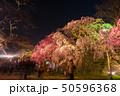 舞鶴公園多聞櫓近くの枝垂桜 夜桜 引き構図 50596368