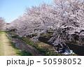 野川の桜(西之橋から見た弁天橋方向) 50598052