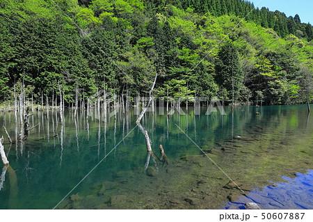 一の俣桜公園蒼霧鯉池 50607887