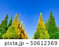 イチョウ 黄葉 秋の写真 50612369