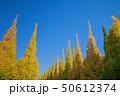 イチョウ 黄葉 秋の写真 50612374