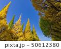 イチョウ 黄葉 秋の写真 50612380