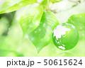 新緑(エコロジーイメージ) 50615624