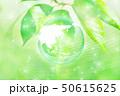 新緑(エコロジーイメージ) 50615625
