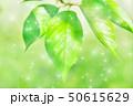 新緑 50615629