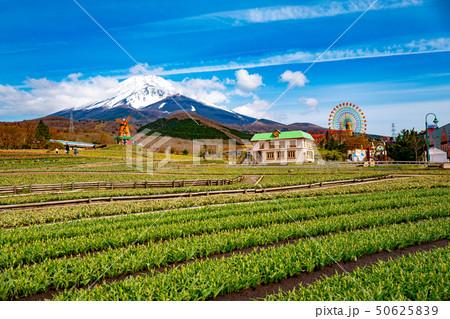 富士山 ぐりんぱ 50625839