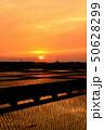 田んぼ 田畑 畑の写真 50628299