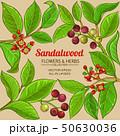 sandalwood vector frame 50630036