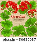 geranium vector frame 50630037