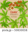 castor vector frame 50630038