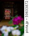 長谷寺:牡丹と紅葉 50633872