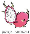 果物 フルーツ 果実のイラスト 50636764