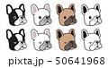 わんこ 犬 ベクトルのイラスト 50641968