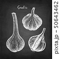 Chalk sketch of garlic 50643462