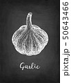 Chalk sketch of garlic 50643466