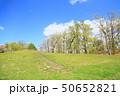 春の公園 新緑の雑木林 50652821