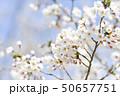 ソメイヨシノ(アップ 空バック) 50657751