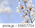 ソメイヨシノ(アップ 空バック) 50657754
