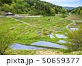 米 風景 穀物の写真 50659377
