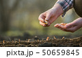 A farmer plants an onion bulb in the soil 50659845