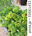 草木 植物 緑色の写真 50661455