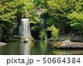 日本庭園 庭園 新緑の写真 50664384