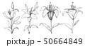 Sketch of flowers. 50664849