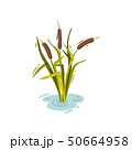 Bush reeds with brown tops. Vector illustration on white background. 50664958