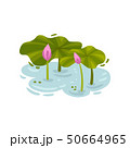 Large leaves of a water-lily with buds. Vector illustration on white background. 50664965