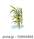 Bush cane without brush in the water. Vector illustration on white background. 50664968