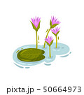 Lily leaf next to the purple buds. Vector illustration on white background. 50664973