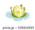 Blooming water lily flower. Vector illustration on white background. 50664995