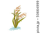Bush cane in the water. Vector illustration on white background. 50664999
