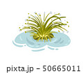 Lush bush of thin leaves on the water. Vector illustration on white background. 50665011