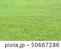 草原 50667286