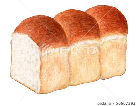 食パン 3連イギリスパン 手描き 水彩 50667292