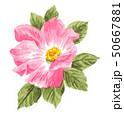 rose19513pix7 50667881