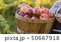 A farmer holds a basket with red apples. Organic farm 50667918