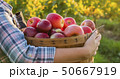 A farmer holds a basket with red apples. Organic farm 50667919