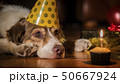 Side view of a cute dog - birthday boy with gifts 50667924