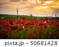 東京スカイツリー ポピー 平井運動公園の写真 50681428