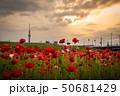 東京スカイツリー ポピー 平井運動公園の写真 50681429
