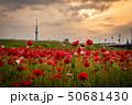 東京スカイツリー ポピー 平井運動公園の写真 50681430