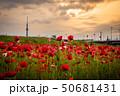 東京スカイツリー ポピー 平井運動公園の写真 50681431
