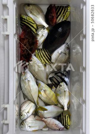 色んな魚 釣果 50682633