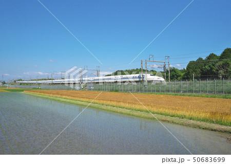 麦秋を行く新幹線 50683699