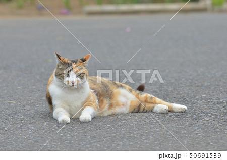 外猫 50691539