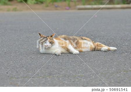 外猫 50691541