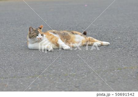 外猫 50691542