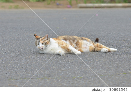外猫 50691545